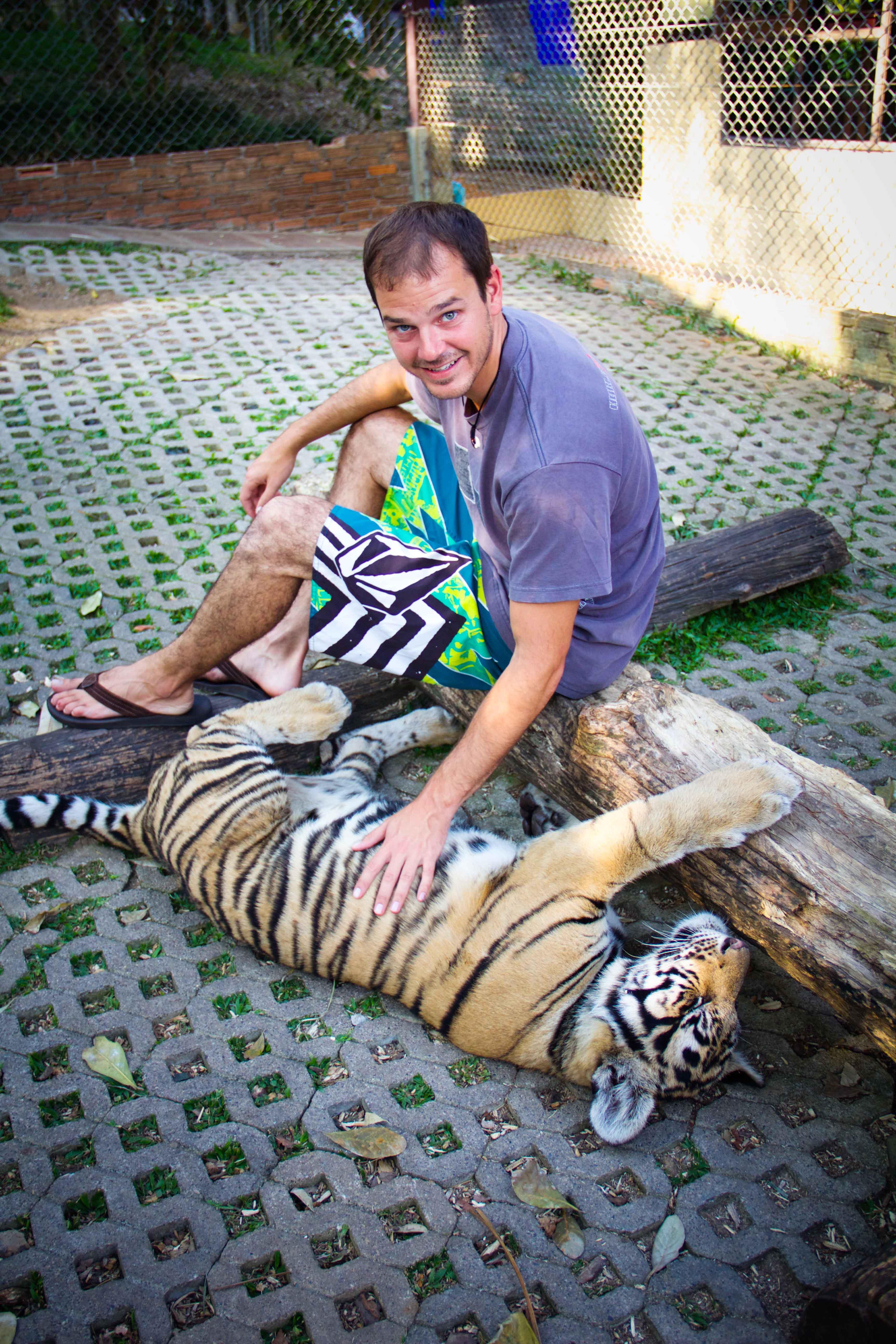 Tigers Small-13