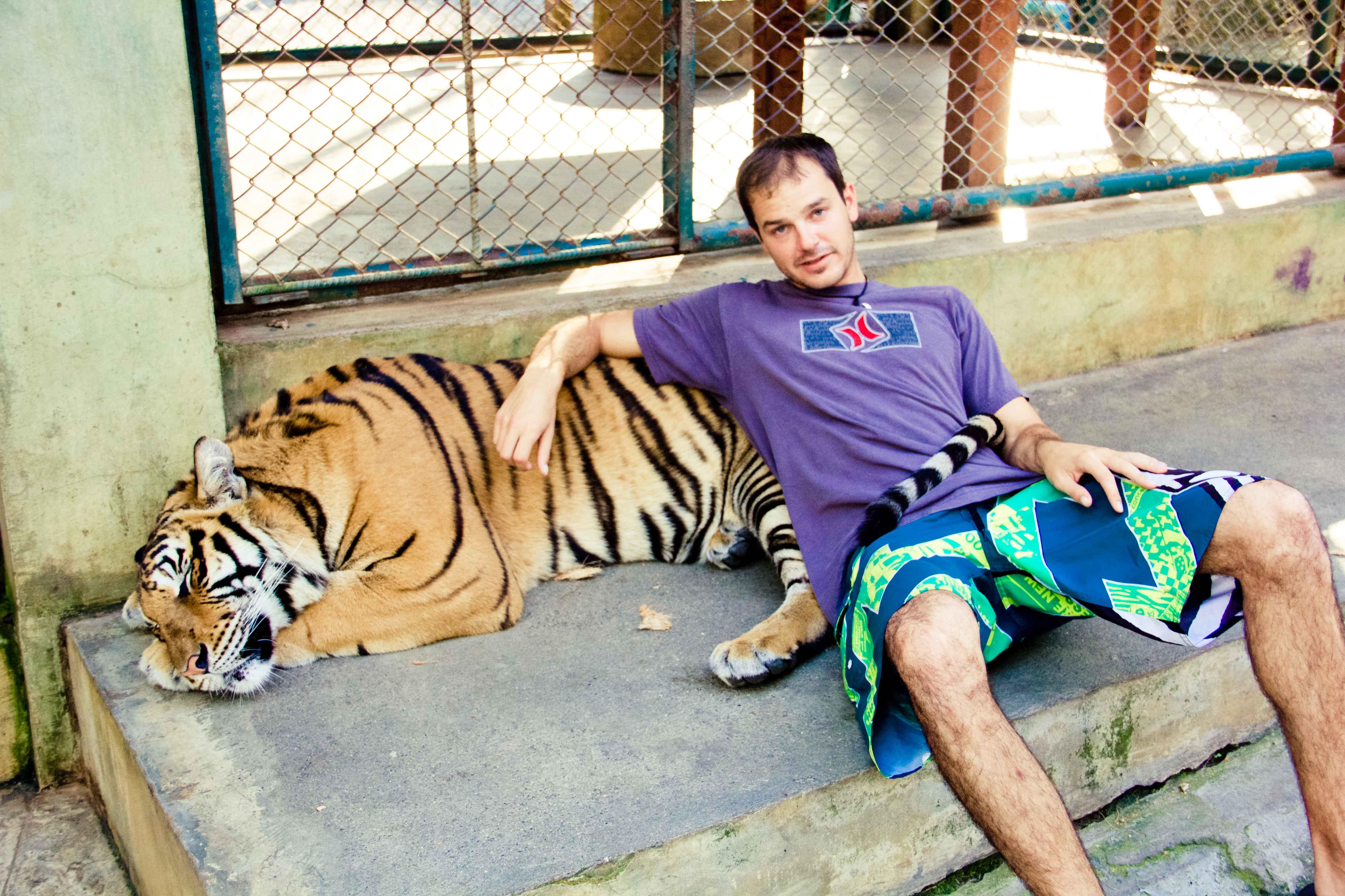 Tigers Small-16