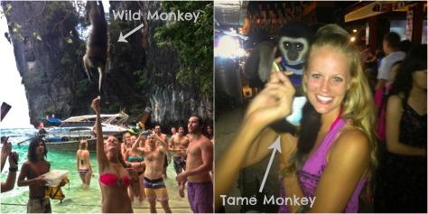 Wild Monkey Tame Monkey