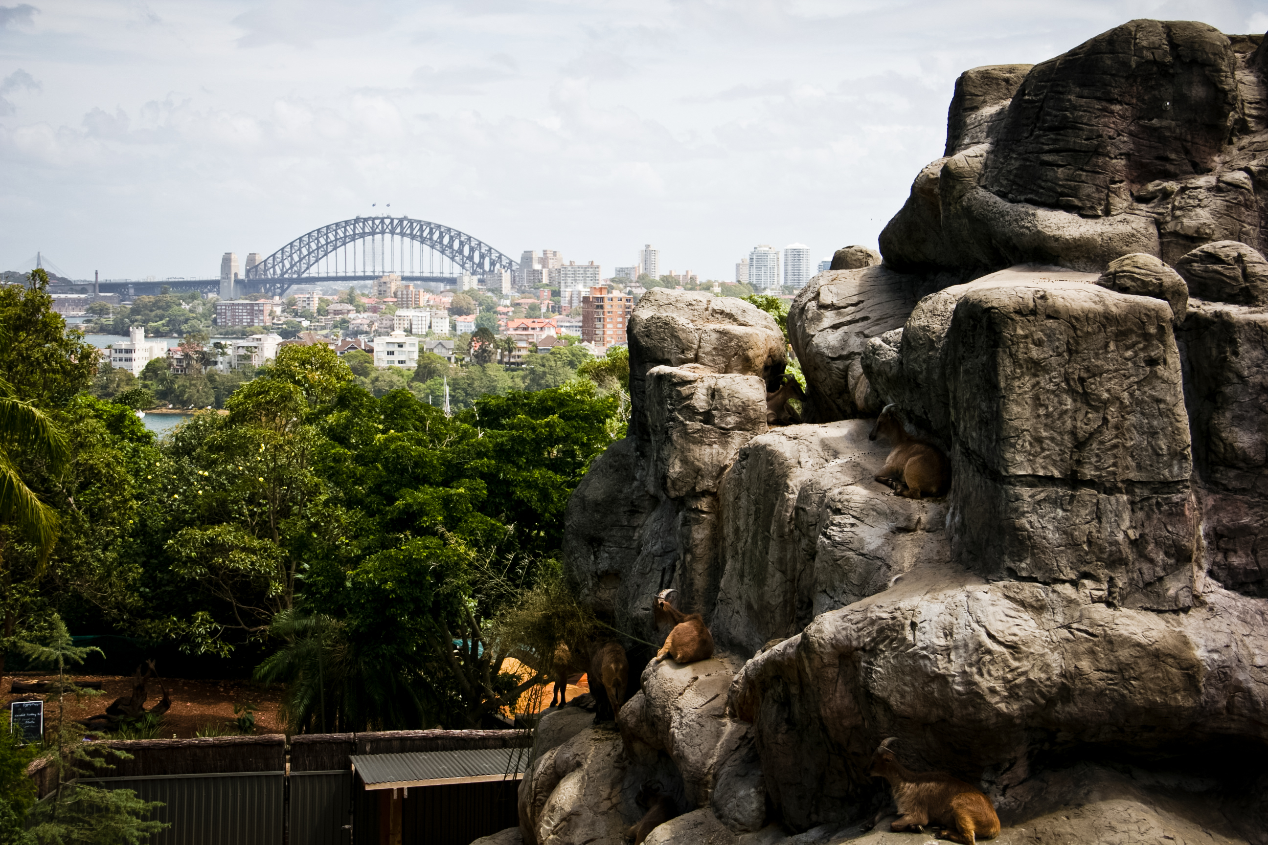 Taronga Zoo | Walking Through Wonderland