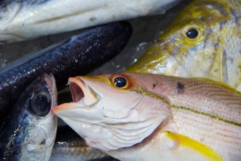 Fish Market-10