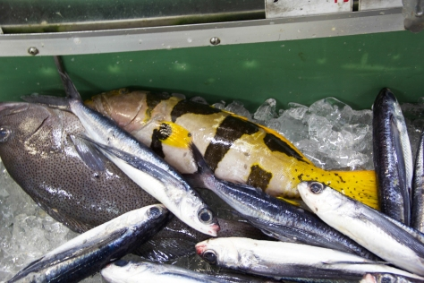 Fish Market-3