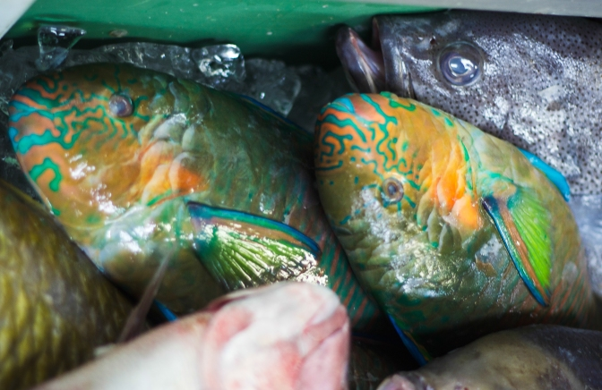 Celebrating at Awase Fish Market