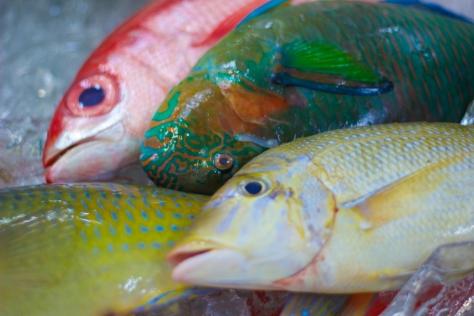 Fish Market-7