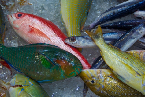 Fish Market-9